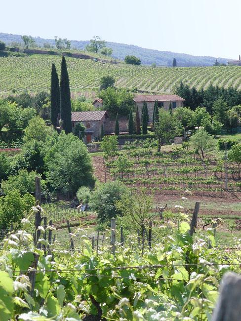 Azienda vinicola Casa Nova