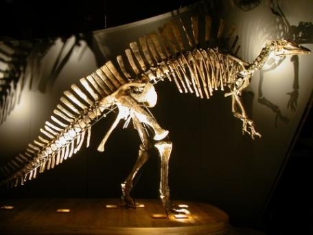 Museo_di_Storia_Naturale_di_Venezia_-_Ouranosaurus_nigeriensis