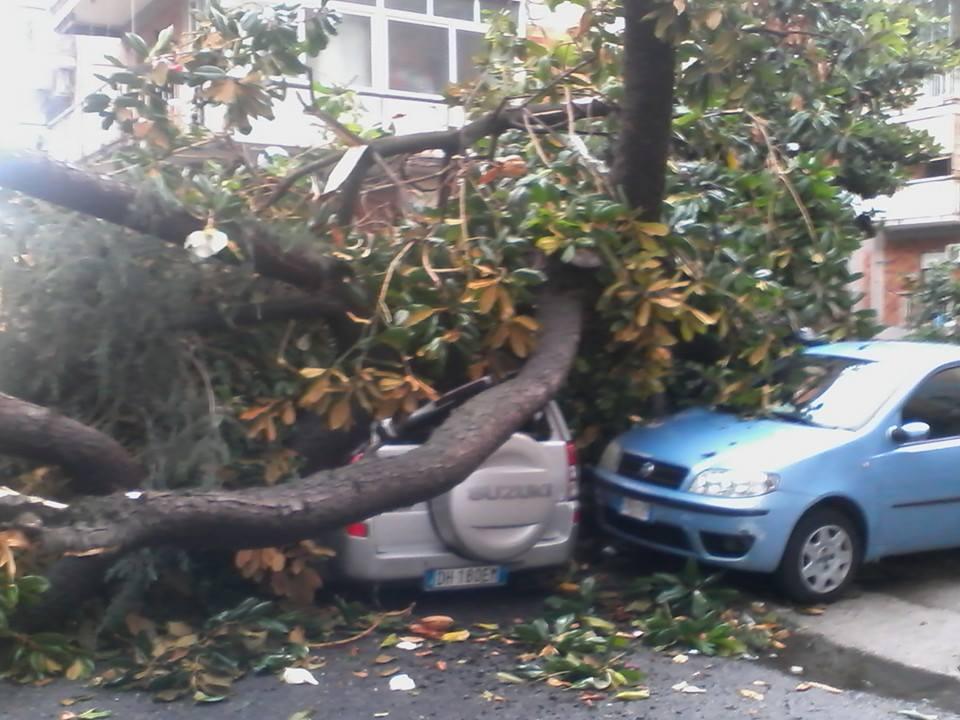 alberi su auto