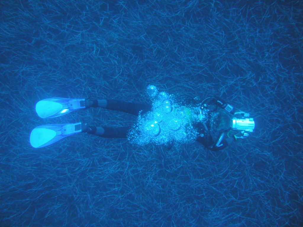 Prateria di Posidonia Oceanica