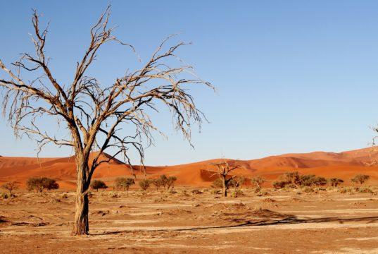 Siccità e deserto