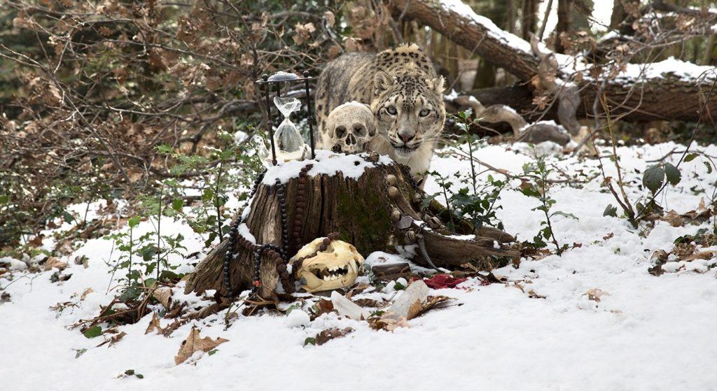 One Planet One Future, Snow leopard opera di Anne de Carbuccia