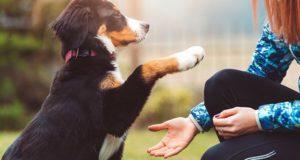 Il cane, un amico di famiglia e i suoi simili